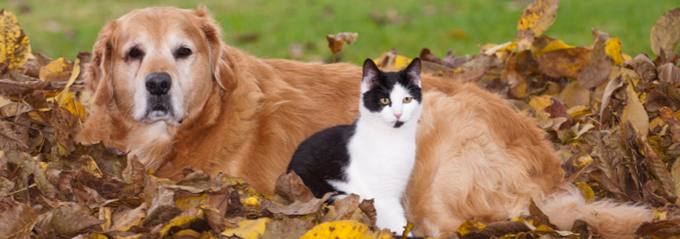 Dog and cat in pile of leaves